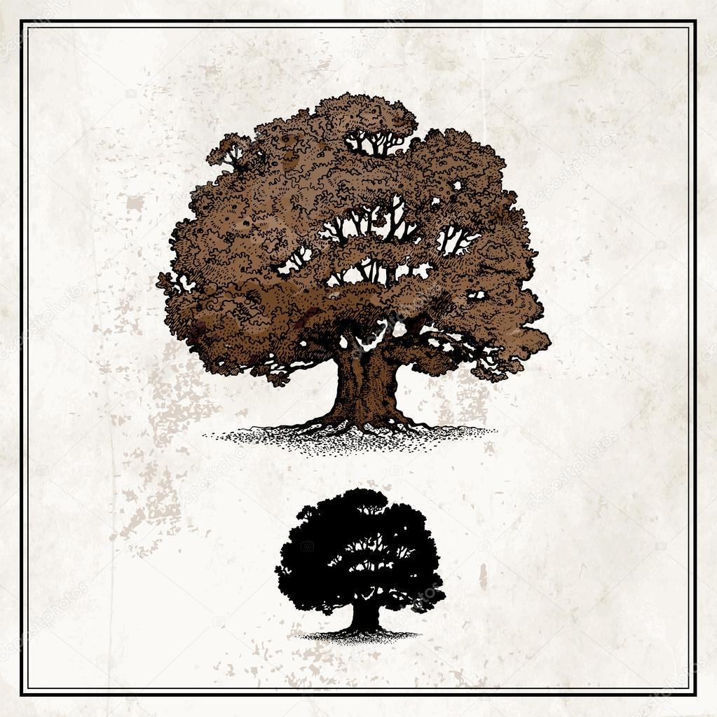 Oak tree isolated on light background stock vector