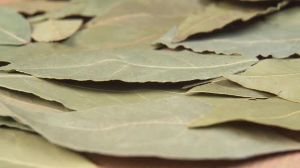 Dried leaves of bay leaf macro. Dolly shot. Extreme close up. Bay Laurel Laurus Nobilis