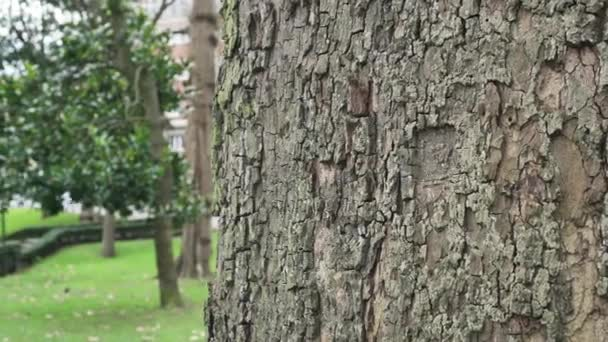 Štěkot kmene stromu zblízka v parku se stromy a trávou na městské ulici s aktivním provozem automobilů na silnici v rozmazané