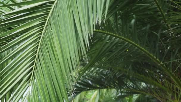 Palm branch in shady tropical exotic thickets. Jungle foliage close-up