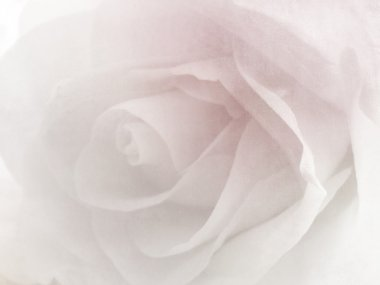 Soft flower background - vintage rose