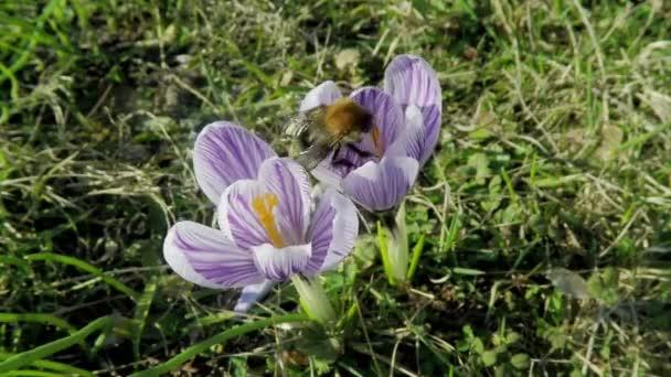 Včelí med kolekce