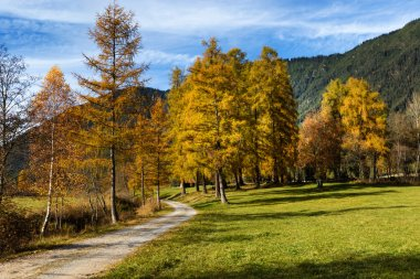 Idyllic mountain scenery in the Alps with hiking trail. Mieminger plateau, Austria