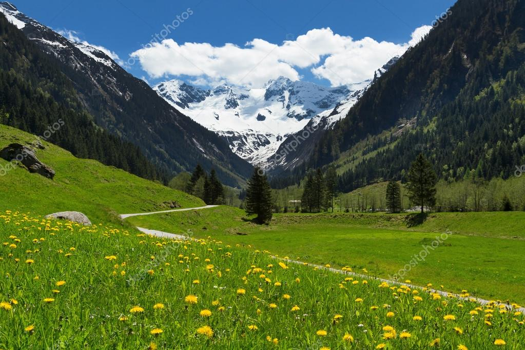 Amazing scenery of alpine valley in springtime with snow capped amazing scenery of alpine valley in springtime with snow capped mountains under cloudy sky and lovely flowers in the foreground photo by anitasstudio voltagebd Images