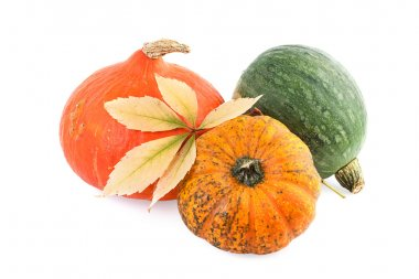 Pumpkin Autumn Concept