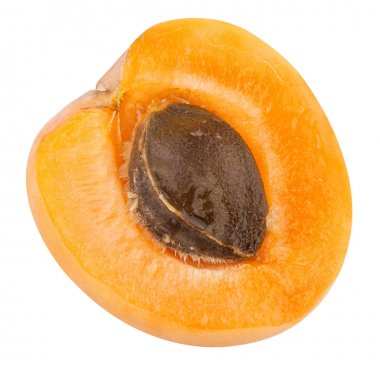 Half of a Apricot with fruit core