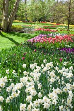 Beautiful spring park Keukenhof. Netherlands.