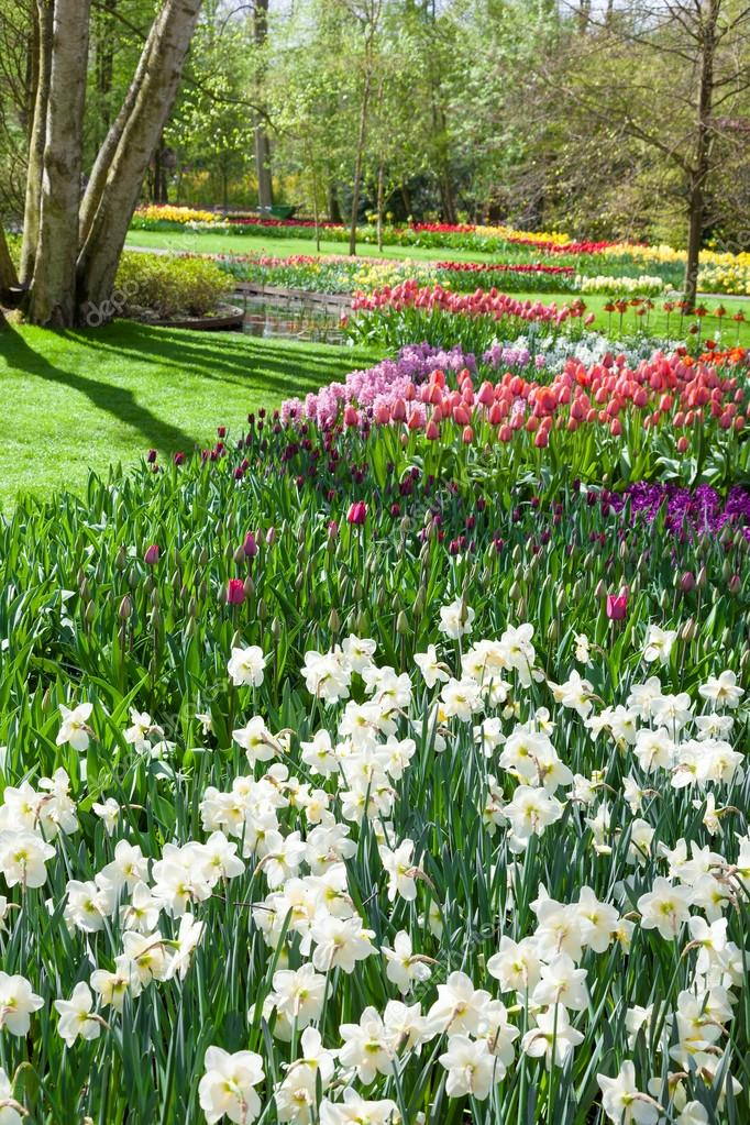 Beautiful spring park Keukenhof. Netherlands.