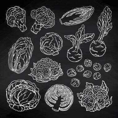 cabbage vegetables set