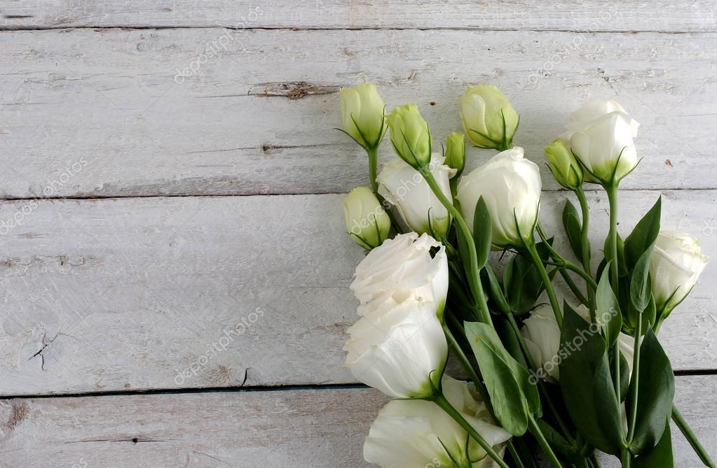 ähnliche Rose Blume — Stockfoto © thewet #95346526