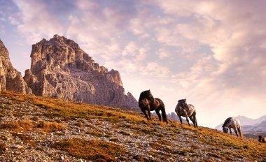 Beautiful horses in Dolomites