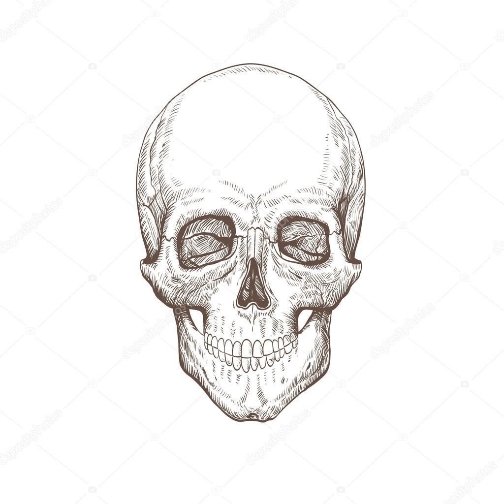 Schädel Hand gezeichnet — Stockvektor © Roman84 #54088093