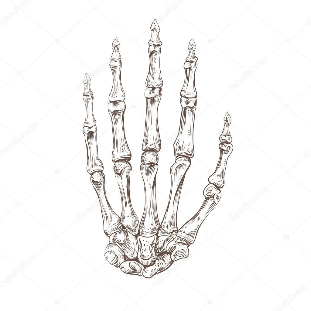 Skeleton hand — Stock Vector © Roman84 #54088131