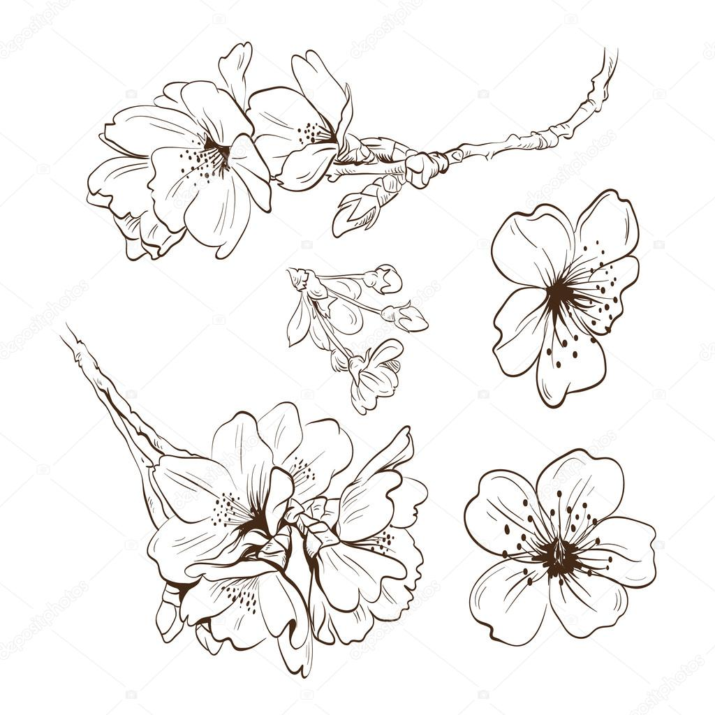 Flowers hand drawn, vector illustration