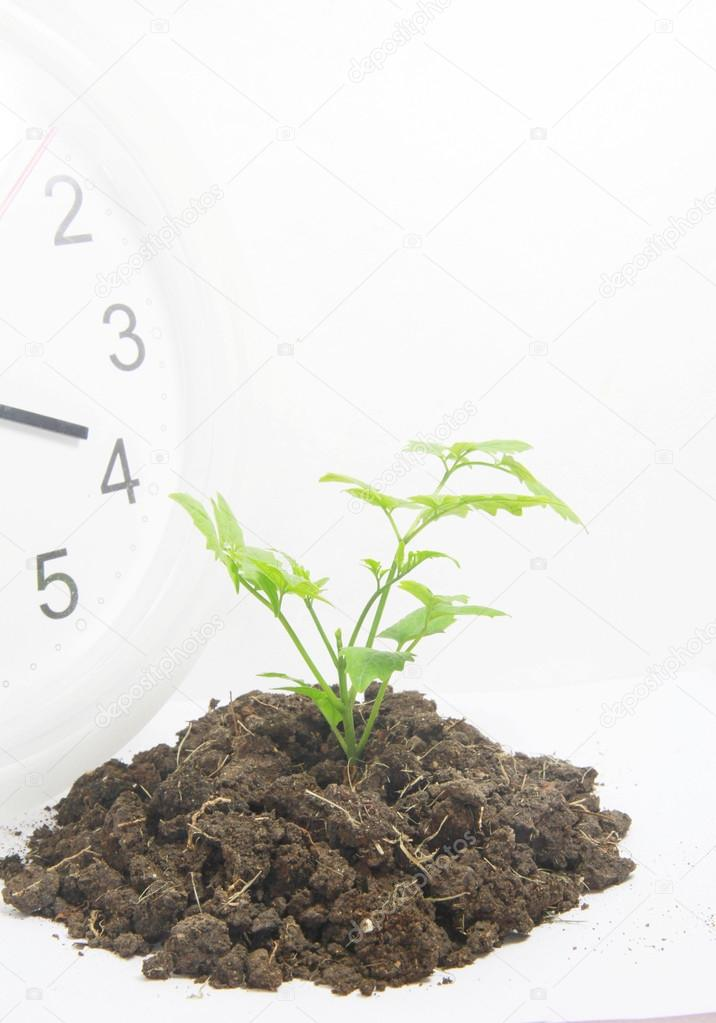 conceptual  time to growing  profit