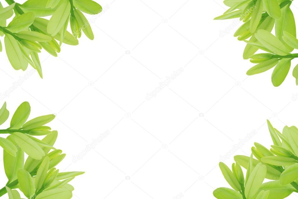hojas de color verde sobre fondo blanco — Foto de stock © janonkas ...