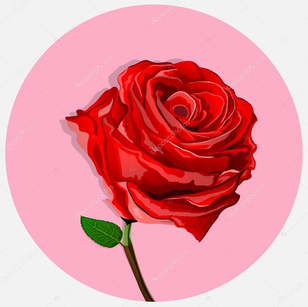 Rosas Rojas Son Muy Bonitas Archivo Imágenes Vectoriales Archam