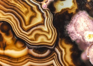Pink Brown Turritella Agate Pattern