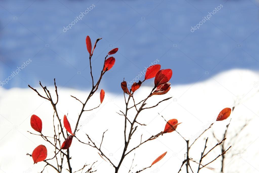 hojas de color rojo brillante en invierno — Fotos de Stock © ASB63 ...