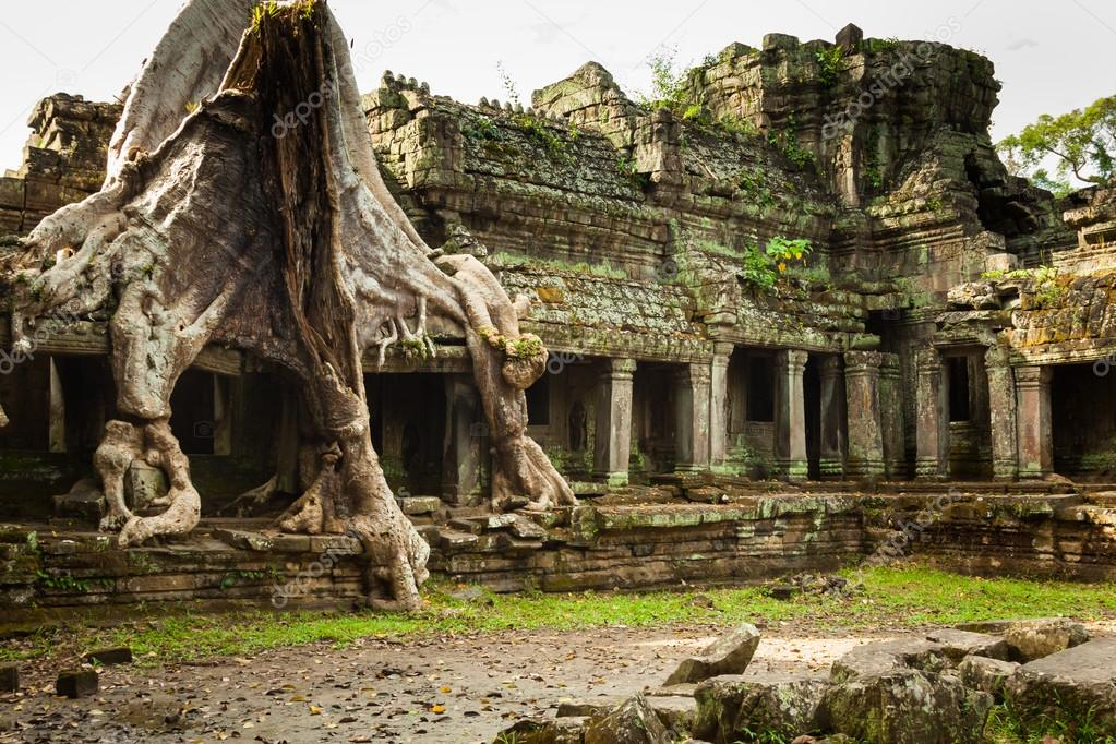 Tree root overgrowing parts of ancient Preah Khan Temple at angk