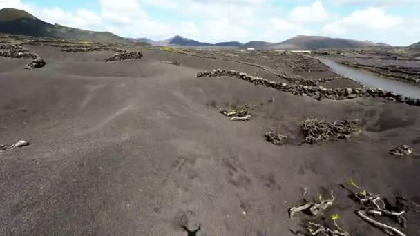 Aerial video footage of the La Geria vineyard on black volcanic soil in Lanzarote, Canary Islands