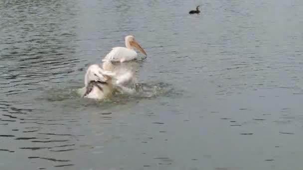 Pelikan Spritzwasser