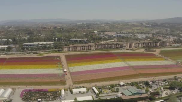 Dron, panoramatické záběry kvetoucích květinových polí v Karlových Varech Kalifornie