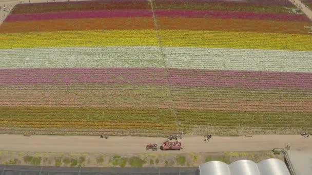 Dron, letecký pohled na kvetoucí květinová pole u Karlových Varů Kalifornie