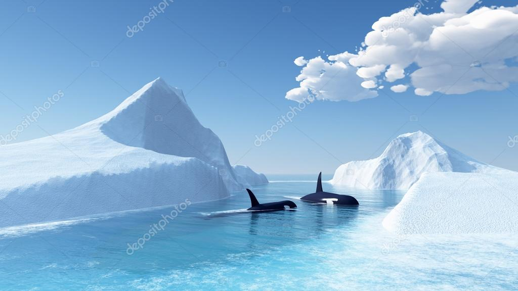 Whales swim in the ocean and iceberg