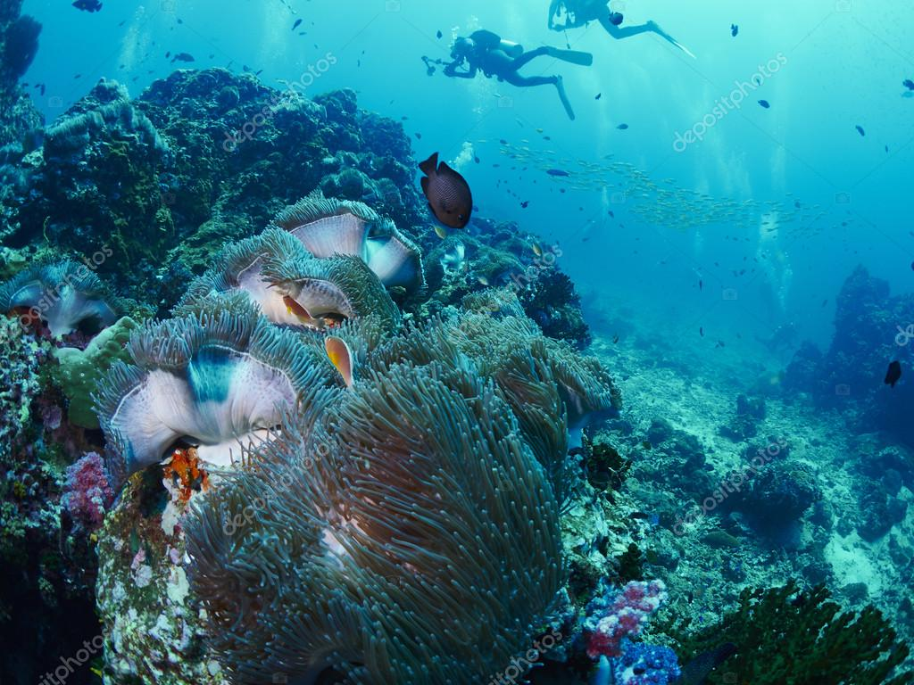 soft coral with diver