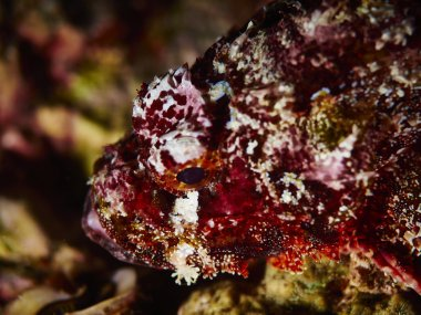 soft coral in undersea