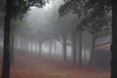 Ethereal misty woodland