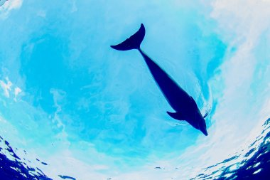 dolphin underwater on sky background