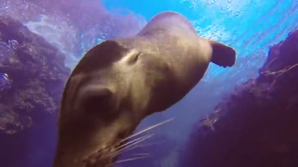Sea lion coming to have fun