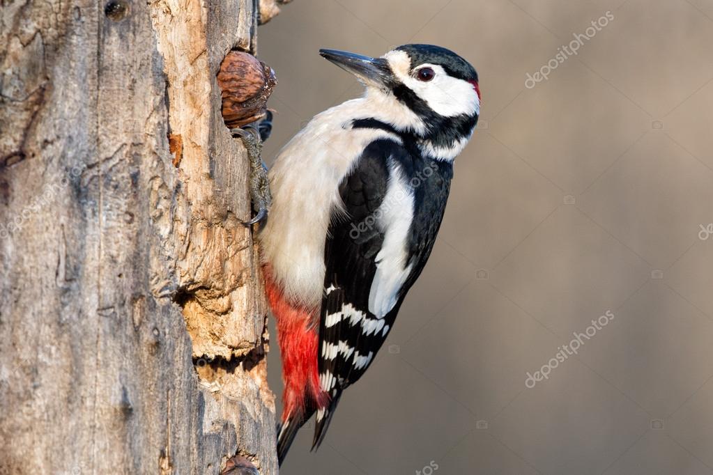 woodpeckers #hashtag
