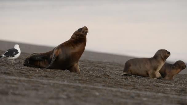 sea lion seal on the beach