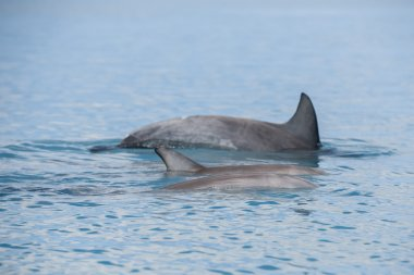 dolphins near the shore get in touch with humans