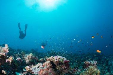 Maldivler mercan house balıklar için