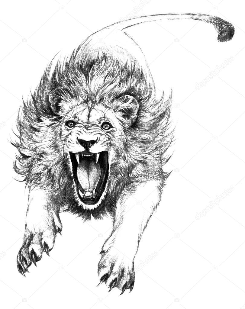 Attacking Lion Stock Photo Grawuar 82320366