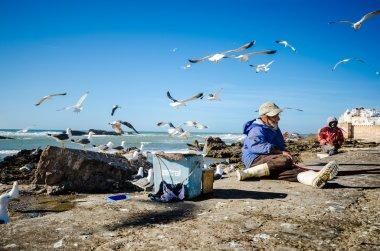 Seagull around fishermen