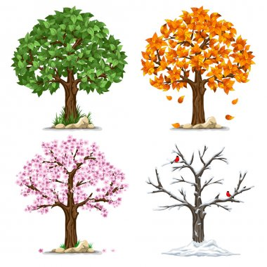 Tree in four seasons - spring, summer, autumn, winter. Vector illustration. Isolated on white background. clip art vector