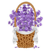 Fotografie Lavender in basket