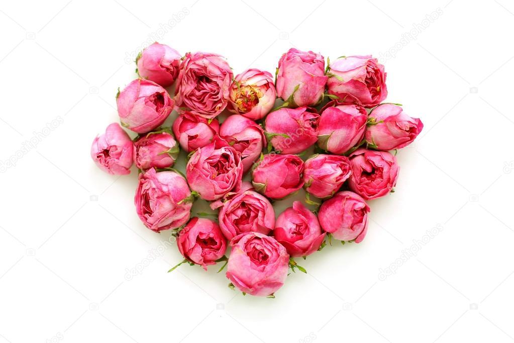 Fotos Pimpollos De Rosas Pimpollos De Rosas De Té En Forma De