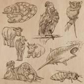 Fényképek Állatok - kézzel rajzolt vector csomag