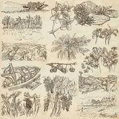 Egy kézzel rajzolt, freehand rajz gyűjtemény - virágok