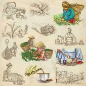 Tea Processing. Agriculture. An hand drawn illustration.