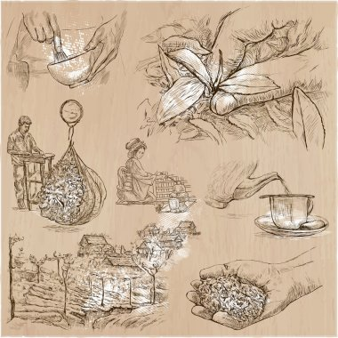 Tea Processing. Agriculture. An hand drawn vector illustration.
