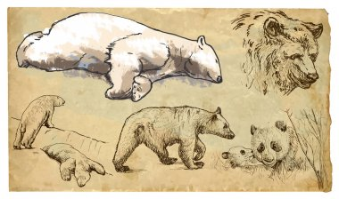 BEARS (Ursidae family). Collection of an hand drawn illustrations (originals, no tracing). Drawings are editable in layers and groups. The color layers are separated. stock vector