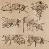 Fényképek méhek, méhészet és méz - kézzel rajzolt vector csomag 3