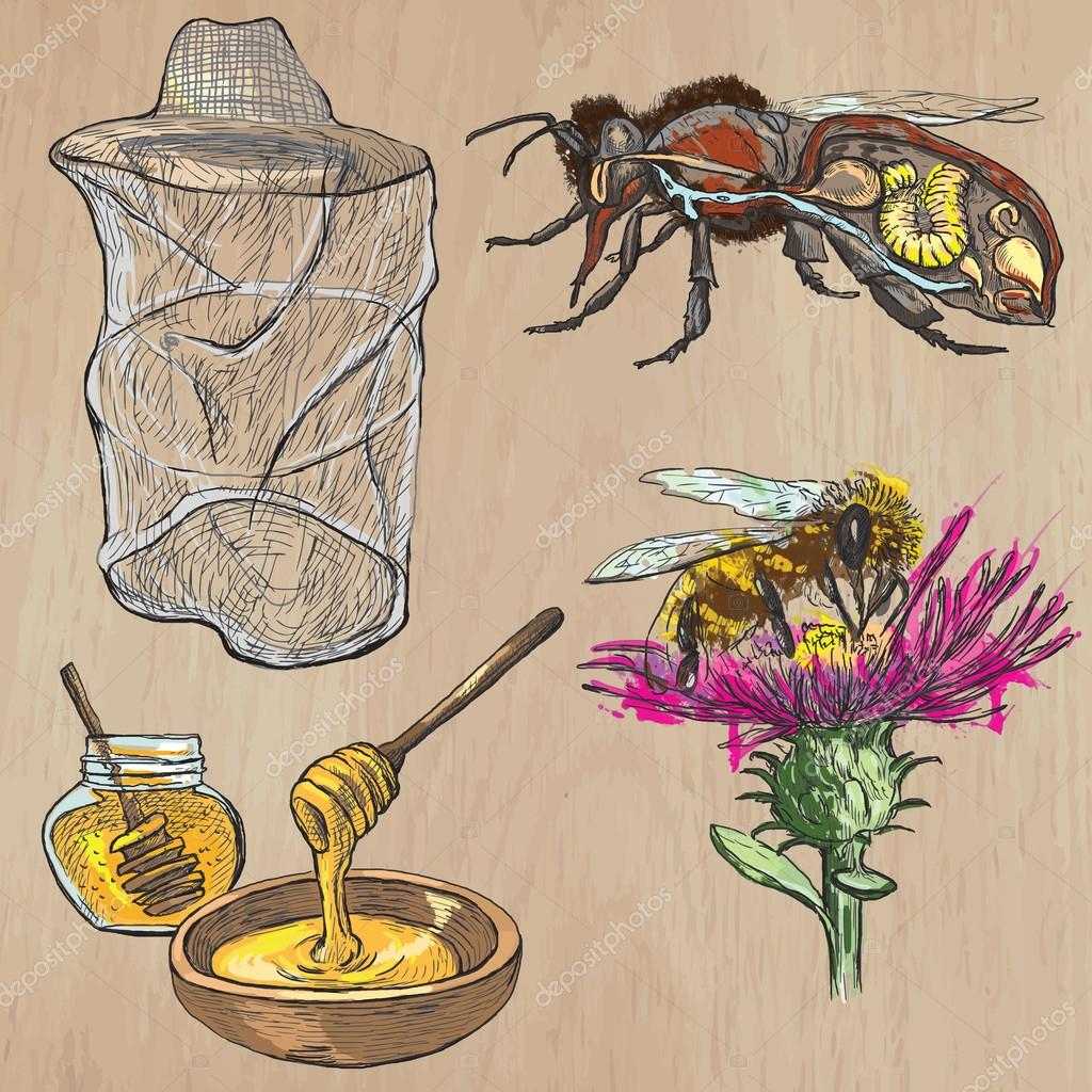 bees, beekeeping and honey - hand drawn vector pack 1